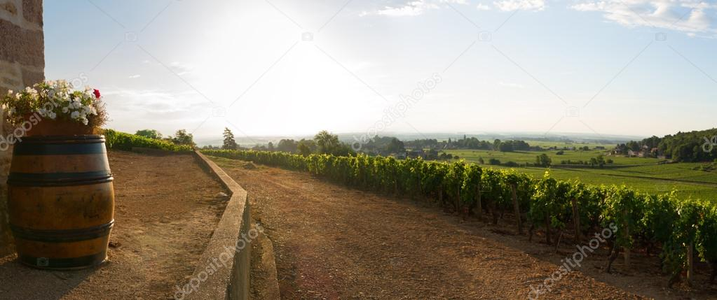 Panoramic View of vineyards in burgundy, France — Stok fotoğraf #12865632