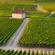 Vineyards in Gevrey chambertin burgundy France - Foto de Stock