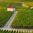 Stock Photo: Vineyards in Gevrey chambertin burgundy France