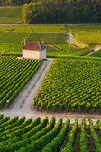 Viñedos en gevrey chambertin francia borgoña — Foto de Stock