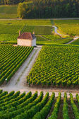 Vineyards in Gevrey chambertin burgundy France — Foto de Stock