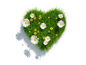 Grass heart on white background — Stock Photo
