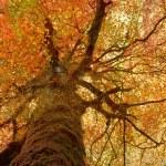 Vintage tree — Stock Photo #6050851