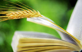 Wheat spike on open book — Stock Photo