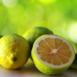 Green lemons on green background — Stock Photo