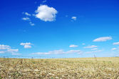 Stubble of Cornfield at Portugal — Stock Photo