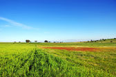 Landscape of portuguese field — Stock Photo