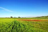 Landschaft des portugiesischen feld — Stockfoto