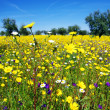 Flowers on field at alentejo region, Portugal — Stock Photo