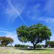 Oak trees on spring at Portugal - Lizenzfreies Foto