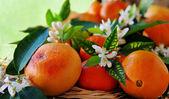 Bloemen en vruchten van orange — Stockfoto