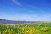 Field at spring time, near alqueva lake — Stock Photo