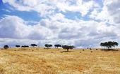 Landschaft von Stroh Feld in portugal — Stockfoto
