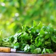Cilantro herbs and knife. — Stock Photo