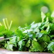 Stock Photo: Cilantro herbs and knife.