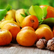 Citrus fruits and walnuts — Stock Photo