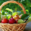 Basket of apples on table — Stock Photo #26741495