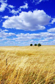 Landscape of portuguese plain, alentejo region — Stock Photo