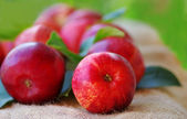 Red apples on green background — Stock Photo
