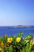 Yellow flowers and pessegueiro island — Photo