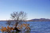 Alqueva lake near Monsaraz village — Stock Photo