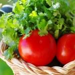 Tomato, cocumber and cilantro herbs — Stock Photo