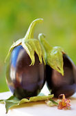 Two black eggplants on green background — Stock Photo