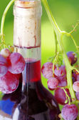 Closeup of wine botle and grapes — Stock Photo