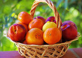 Citrus fruits and peaches — Stock Photo