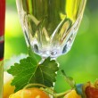 White wine bottle, glass and leaves — Stock Photo