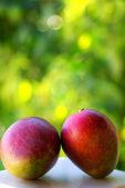 Two mangoes fruits are isolated on green background. — Stock Photo