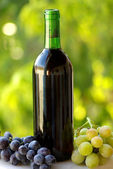 Bottle of red wine next to the black and white grapes. — Stock Photo