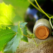 Bottle of red wine and leaves.  — Stock Photo