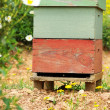 Bee house at Portugal. — Stock Photo