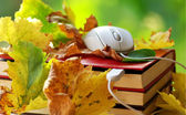 Mouse and leaves on book. — Stock Photo