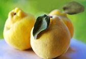 Close-up of quince fruits — Stock Photo