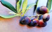 Ripe olives on branch — Stock Photo