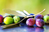Ripe Olives, olives in olive tree branch — Stock Photo