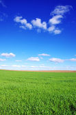 Green wheat field and blue sky — Stock Photo