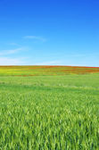 Landscape of field at Spring time  — Photo