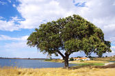 Alqueva barrage with solitary tree.  — Stock Photo