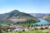 Landscape of  Douro vineyards, Pinhao, Portugal — Stock Photo