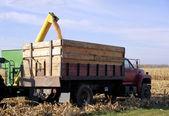 Loading corn on truck — Stock Photo