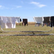 Clothesline — Stockvideo