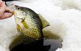 Outro tipo de peixe de pesca do gelo — Fotografia Stock