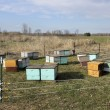 Beehive boxes — Stock Photo