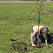 Planting trees - Stock Photo