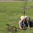 Planting trees — Stock Photo
