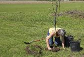 Planting trees — Stock Photo