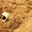 Human skull in the sand — Stock Photo #26575219